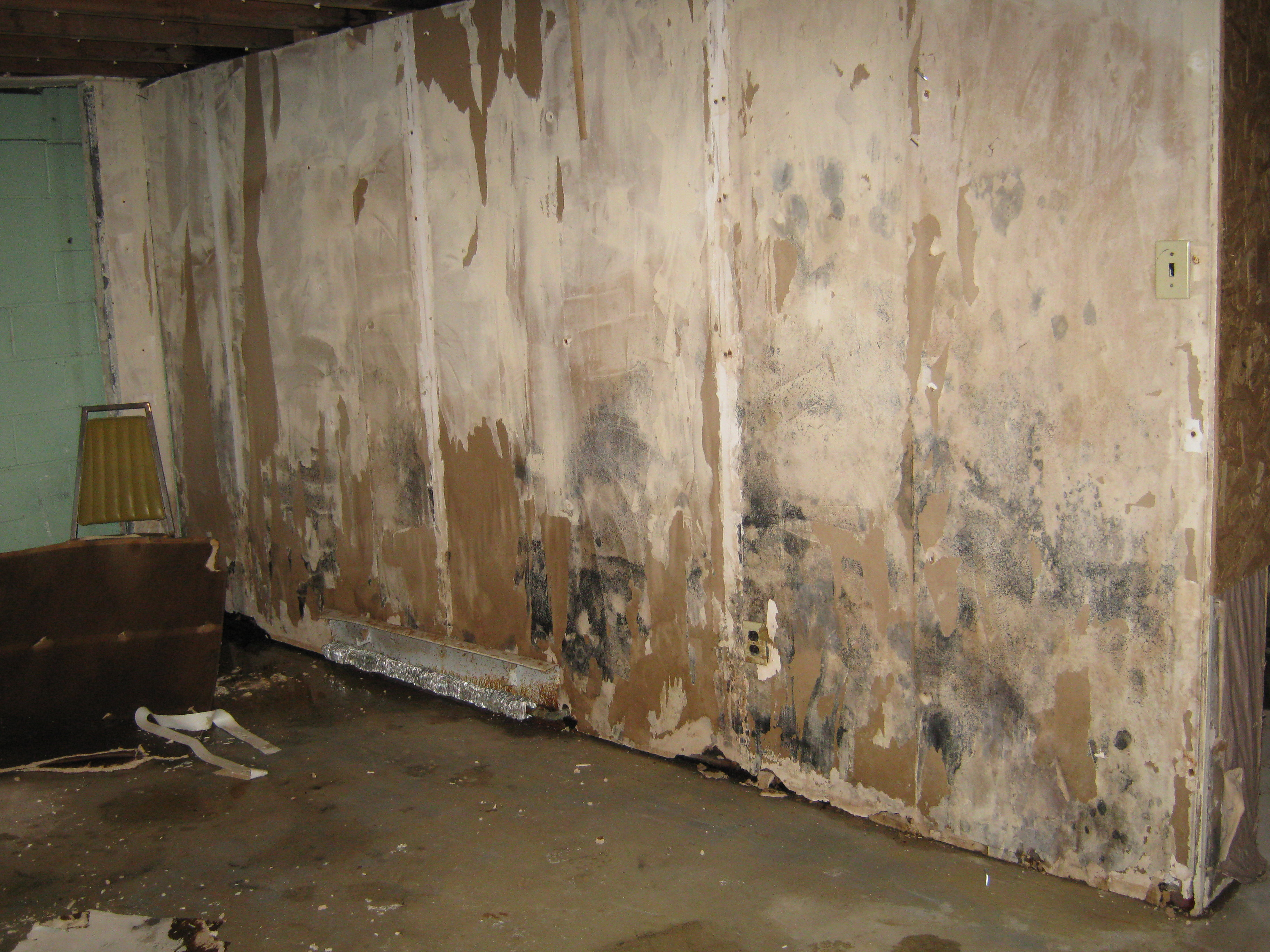 water damaged buildings and mold toxins