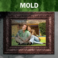 Mold damage restoration services