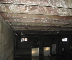 mold growth in Philadlephia basement after a flood