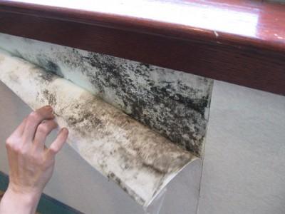 Langhorne, PA mold