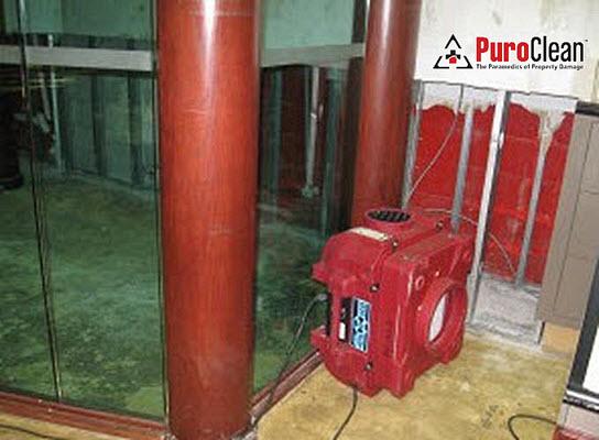 professional mold remediation, Langhorne PA