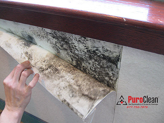 without professional water damage remediation mold grows behind wall paper