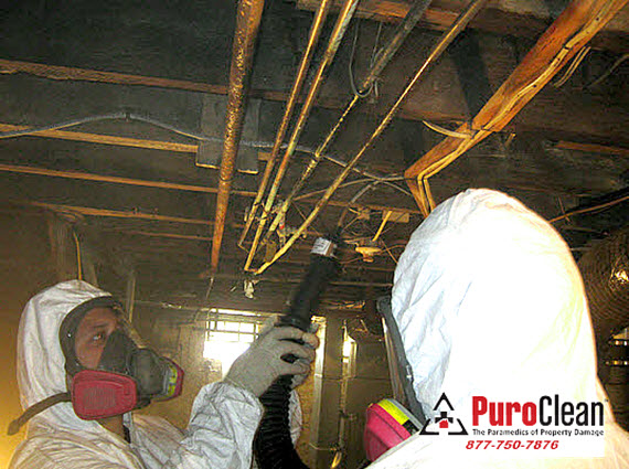cleaning mold damage in Philadelphia basement