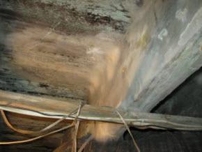 South Philadelphia basement mold damage needs remediation
