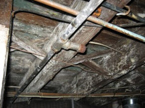 mold grows on wet pipes in a Cherry Hill, NJ basement