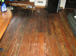 mold grows on hardwood floors when left wet too long