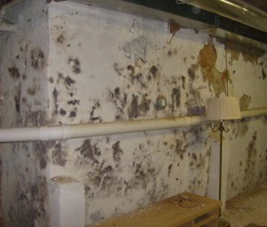 chronic fatigue syndrome and mold: moldy basements need remediation before they make you sick