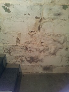 what looks like mold isn't always mold during a mold inspection - it's efflorescence