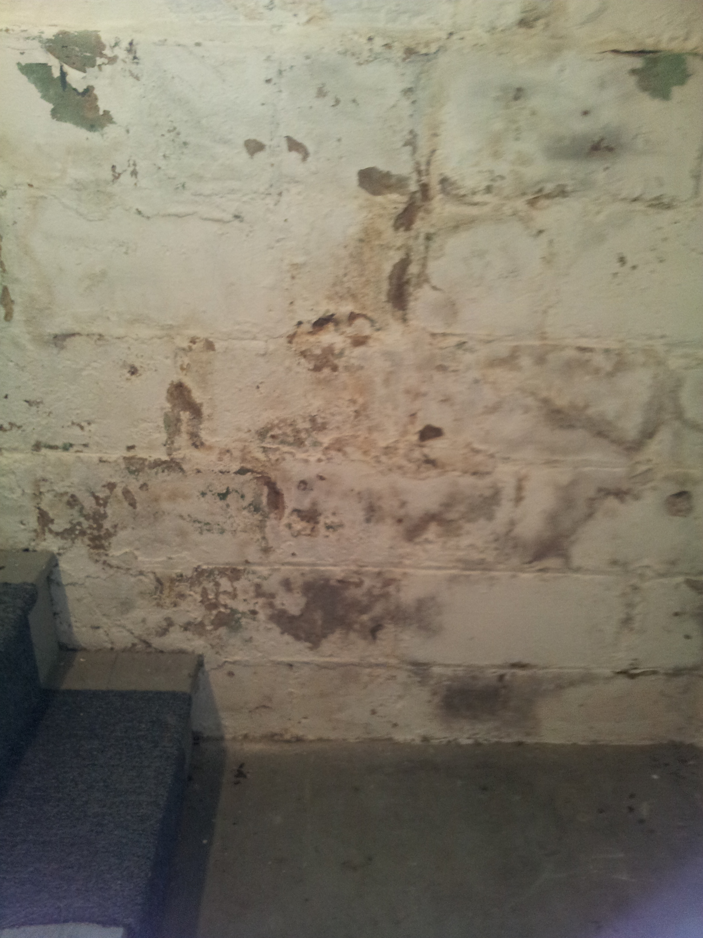 What Looks Like Mold Isn T Always During A Inspection It S Efflorescence