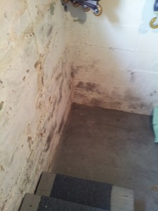 mold inspection in basements sometimes reveals it's not mold - it's efflorescence