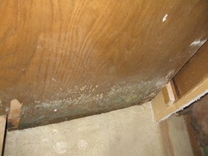 Mold growth after a punctured plumbing pipe in Cherry Hill, NJ