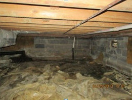 prevent termites after water damage