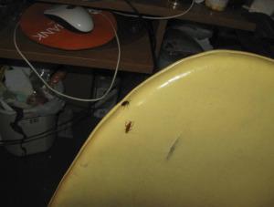 hoarding behaviors and roach infestation