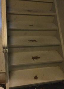 biohazard clean up in Cherry Hill Condominium