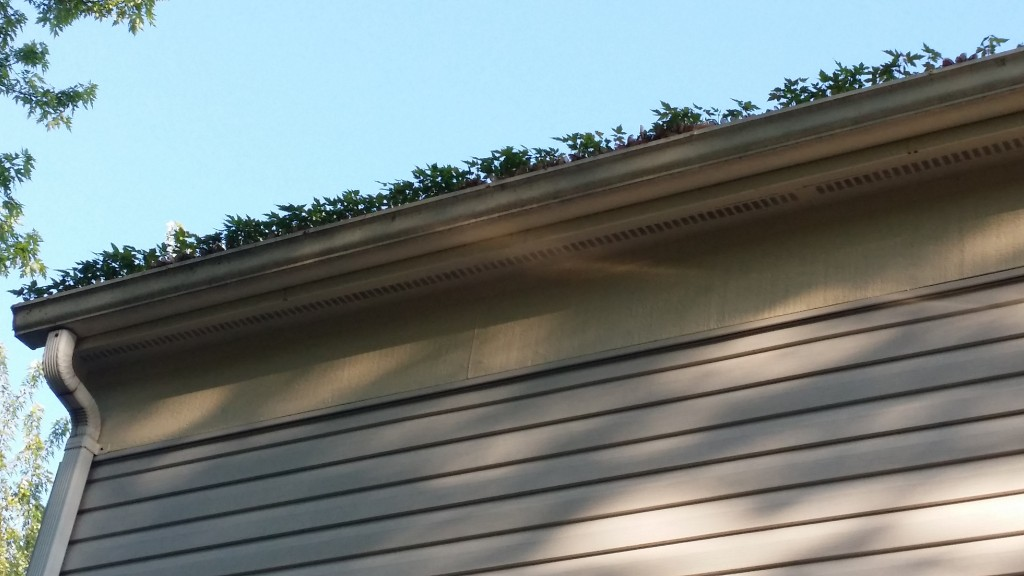 homeowner hacks: keep your gutters clean