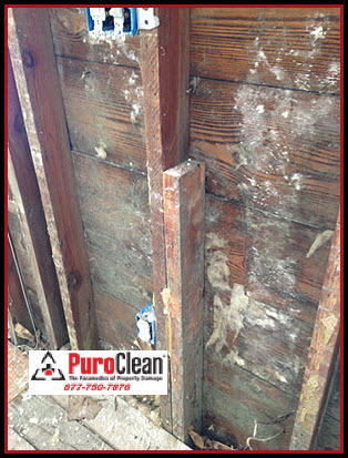 illness caused by mold exposure at the Jersey Shore