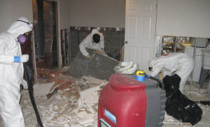 safely remediating mold