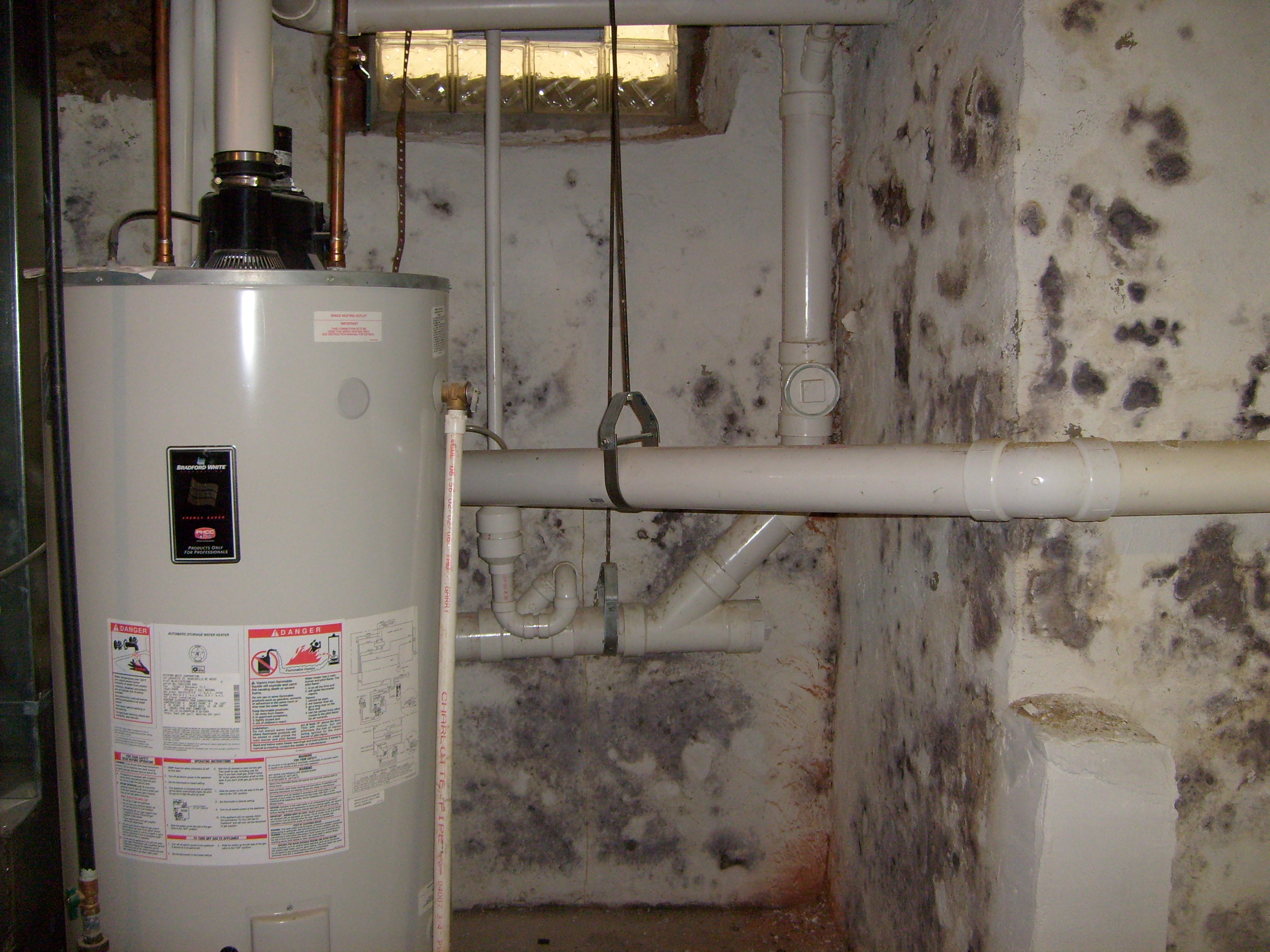 prevent basement mold by drying water damage fast