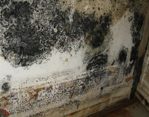 mold grows on school walls