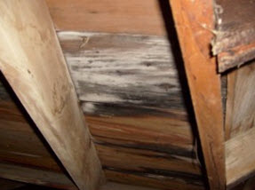 attic mold growth, Medford NJ