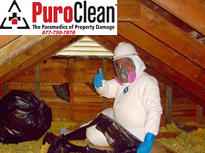 attic mold damage restoration technician