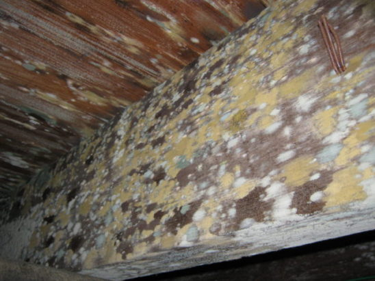 attic mold growth needing professional removal