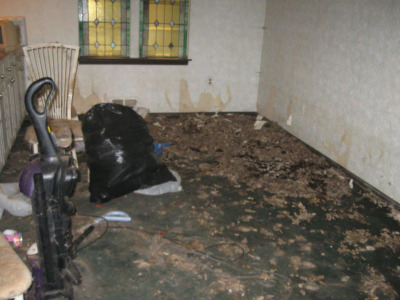 animal hoarding cleanup Marlton, NJ