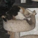 Help for the Horrors of Animal Hoarding