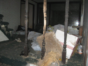 distressed cat behavior in a hoarder's home