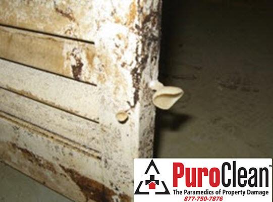 Mold problem in Burlington, NJ basement