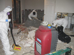 expert mold remediation