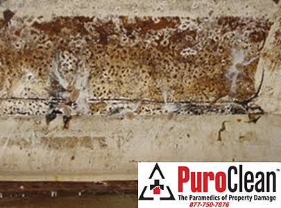 Sewell, NJ basement mold problem