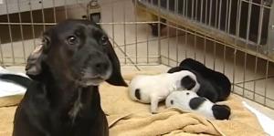 Animal Rescue across state boundaries