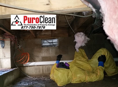 Expert mold remediation Whiting, NJ
