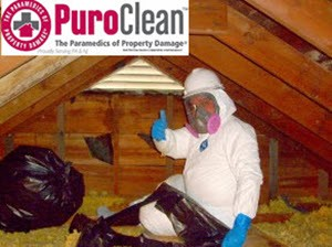 personal protective equipment in mold remediation