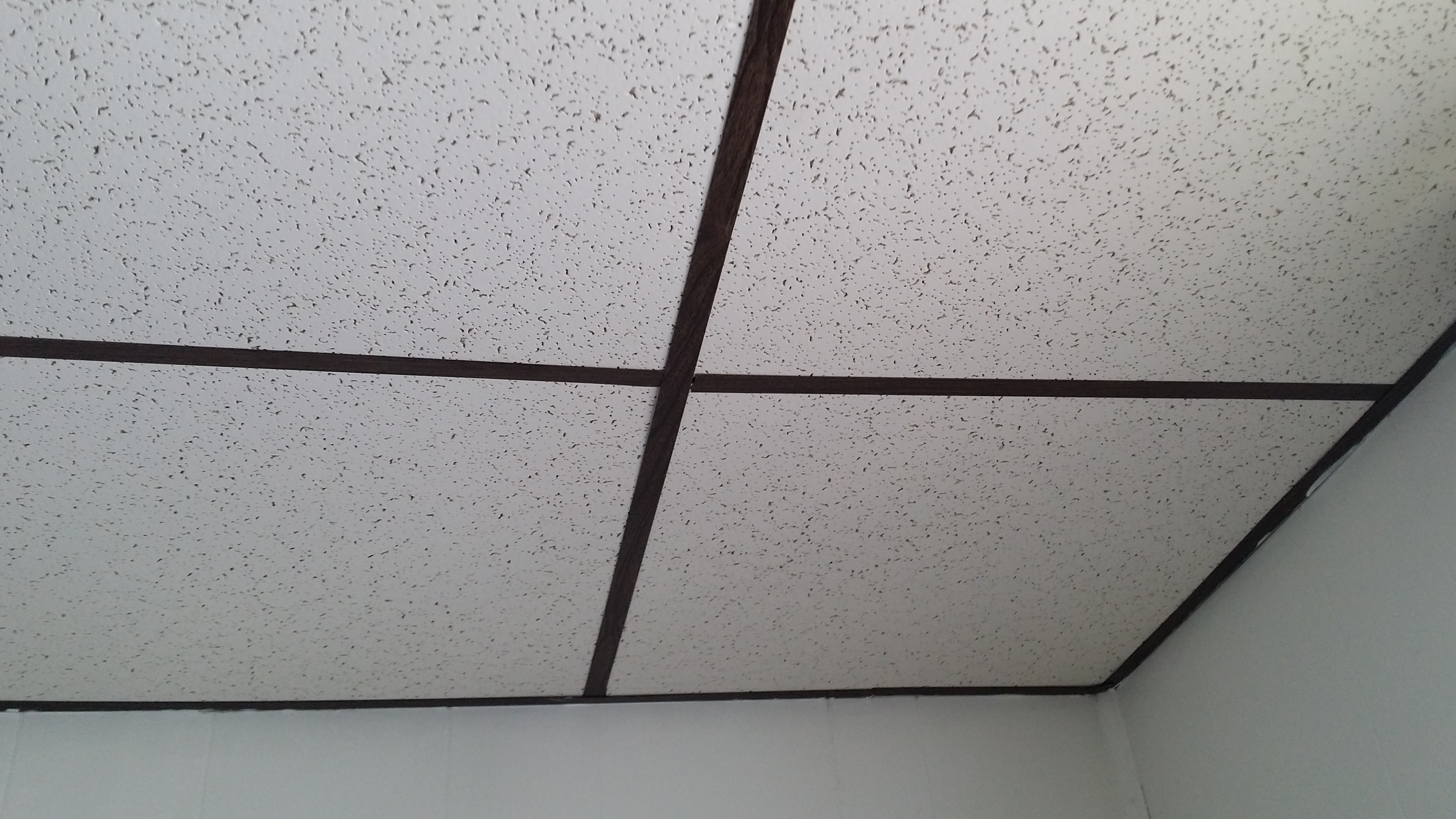 for the mold sensitized individual - drop ceilings may cover old water damage and mold