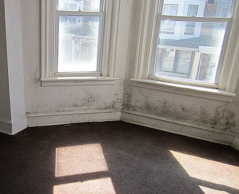 too late to prevent mold damage to this Philadelphia row home