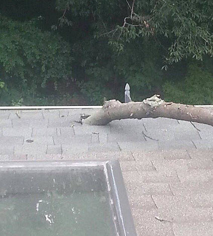 windstorm roof damage from tree branch