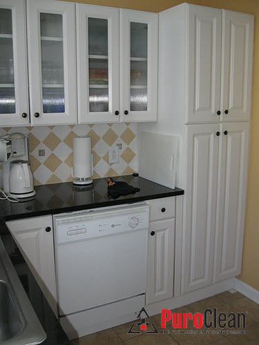 Philadelphia, PA - kitchen mold removed safely