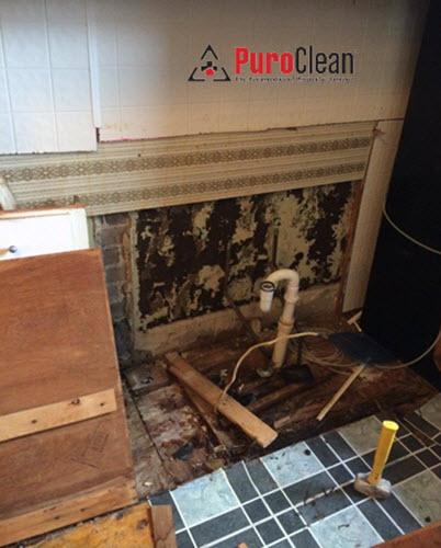kitchen mold Philadelphia