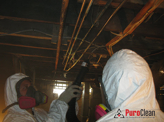 basement mold removal technicians