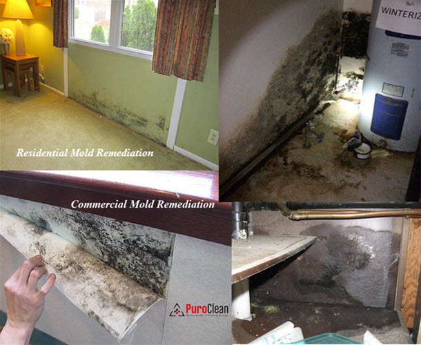 if you find mold in your residential or commercial building in Philadelphia and Cherry Hill call us