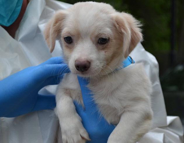 spike in animal hoarding cases in New Jersey