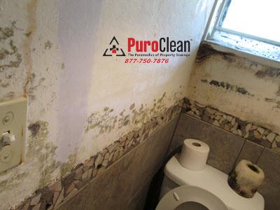 Philadelphia PA bathroom mold