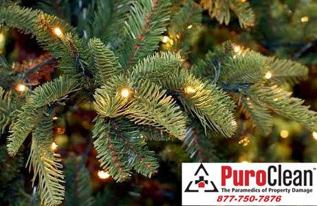 an unwanted guest at the holidays: Christmas Tree Mold
