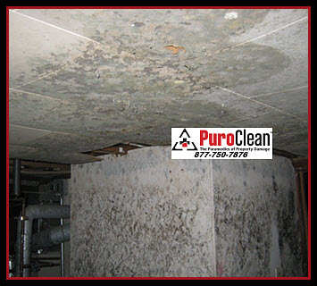 protect yourself from mold scams in Philadelphia