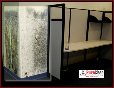 get mold cleaned professionally