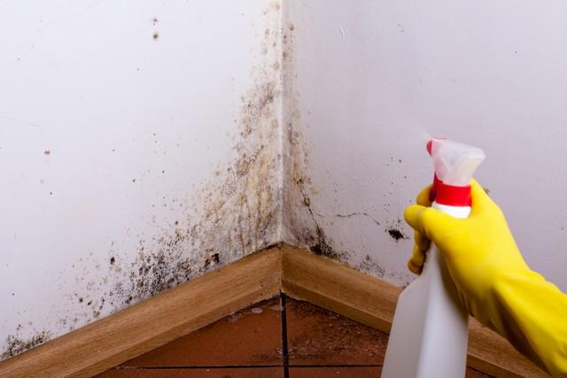 Are Dead Mold Spores Harmful?