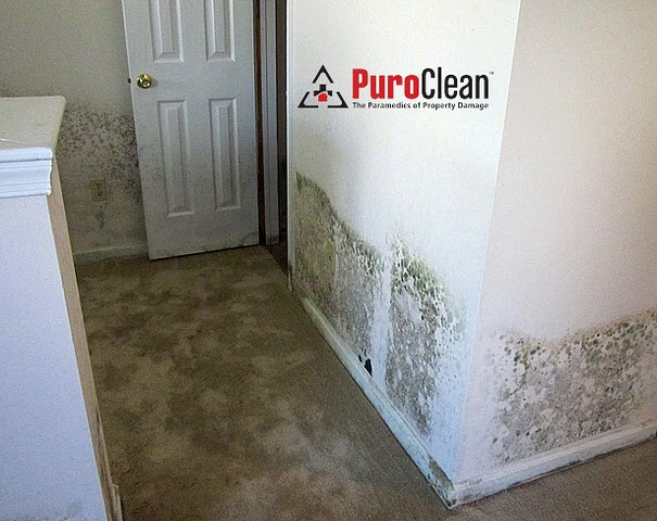 Modern Day Construction Promotes Mold Growth!